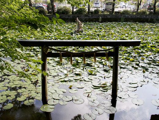 torii0484.jpg